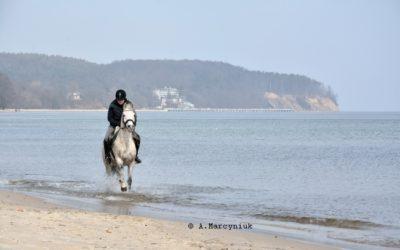 Sopot-konie_