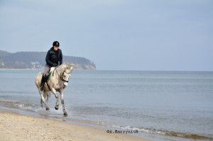 Sopot-konie__15