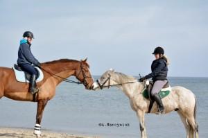 Sopot-konie__22