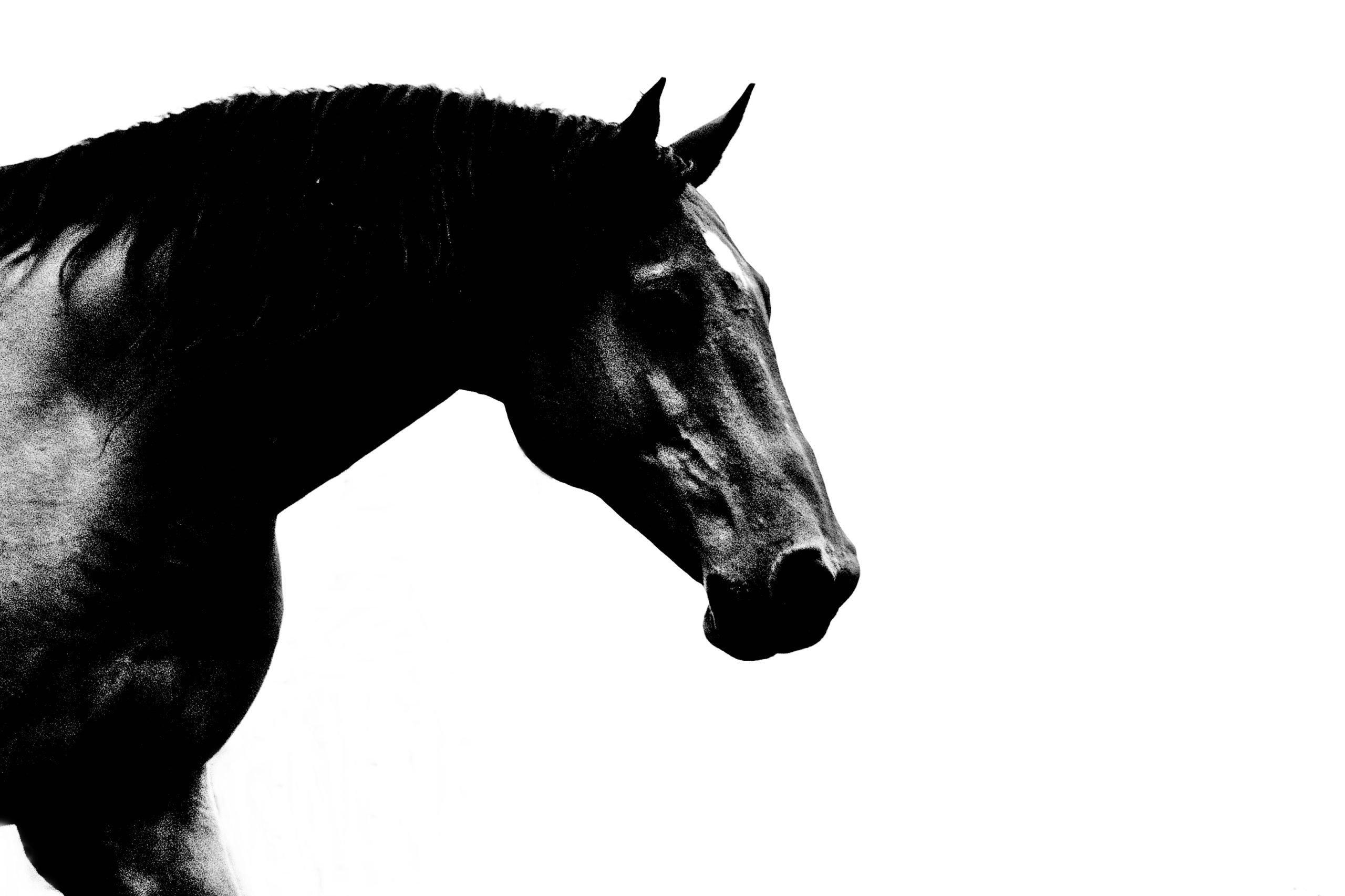 Konie (41)